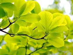 fresh-green-2490820_1280 (3).jpg